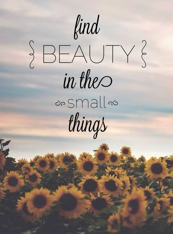 FindBeautyInSmallThings Mobile Wallpapers